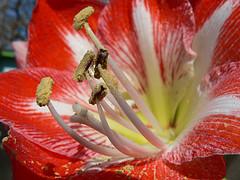 App für Allergiker flickr (c) erink8 CC-Lizenz